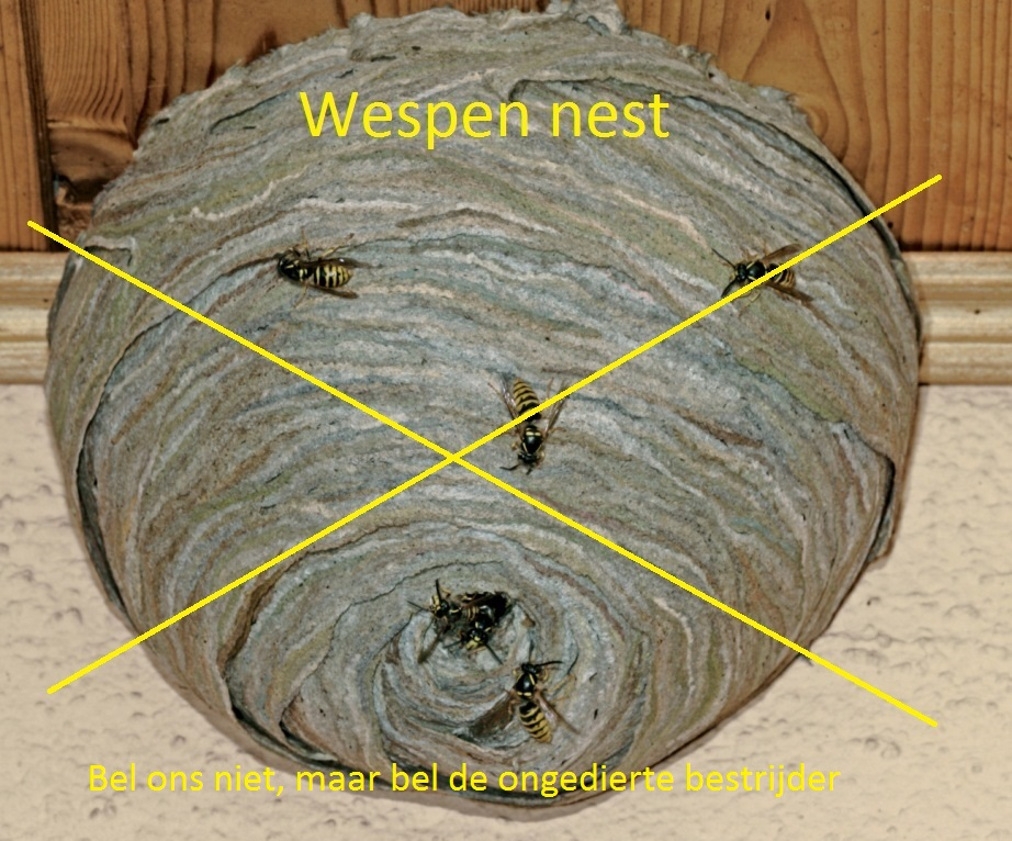Wespen Nest Site New